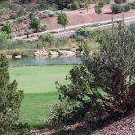 course-bushes